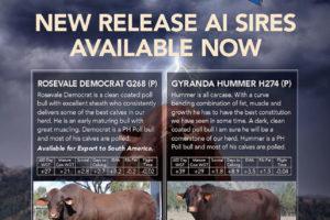 New Release Semen Sires | Gyranda