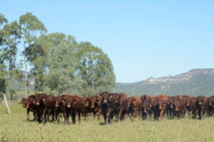 Early weaners at Gyranda in April 2014